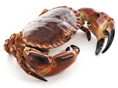 everything but the shell a guide to eating brown crab klaw